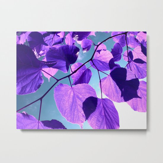 purple lime leaves I Metal Print