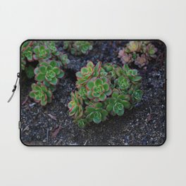 Succulent cactus green flowers red finished a lot of Laptop Sleeve