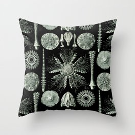 Ernst Haeckel - Scientific Illustration - Echinidea (Sea Urchins) Throw Pillow