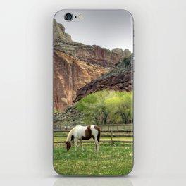 Pinto iPhone Skin