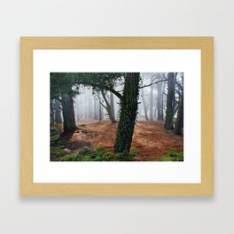 Mysterious Forest Framed Art Print