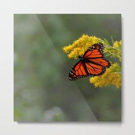 Autumn Monarch by Teresa Thompson Metal Print