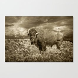 American Buffalo in Sepia Tone Canvas Print