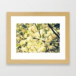 Cherry Blossoms I Framed Art Print