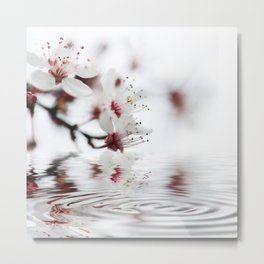 white cherry blossom and water reflection Metal Print