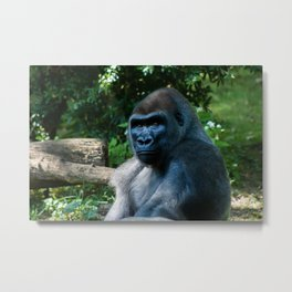 The Bronx Zoo Metal Print
