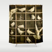 pigeon Shower Curtains featuring Pigeon Holed by Chris Lord