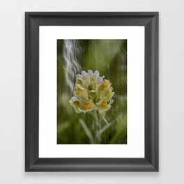 Yellow common Toadflax flower Framed Art Print