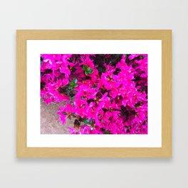 Fuschia  Framed Art Print