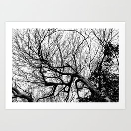 Branched out Art Print