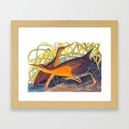 Great Red Breasted Rail John James Audubon Scientific Birds Of America Illustration Framed Art Print