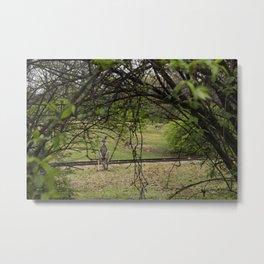 Roo through the Trees Metal Print