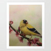 Goldfinch Watercolor Print Art Print