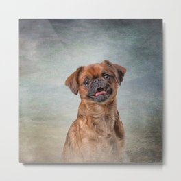 Drawing Dog breed Griffon Brabanson Metal Print