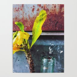 yellow euphorbia milii plant with old lusty metal background Poster
