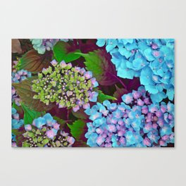 Hydrangea Pink and Blue Canvas Print