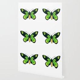 Queen Victoria's birdwing butterfly Wallpaper