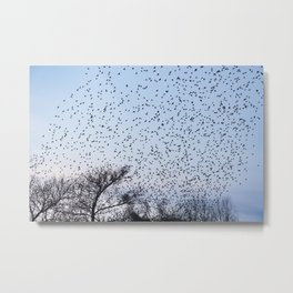 starling murmuration Metal Print