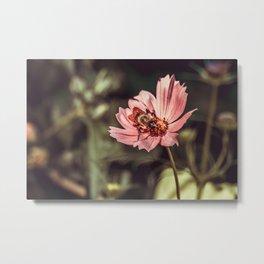 Working Bee. Photograph Metal Print