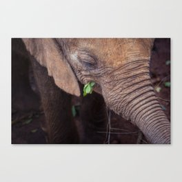 Solemn Moments Canvas Print