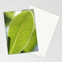 leave-leaf Stationery Cards