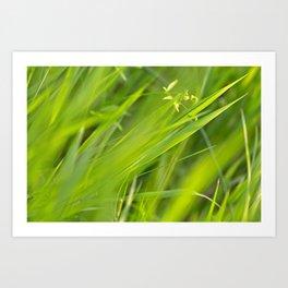 Shallow Blades of Grass Art Print