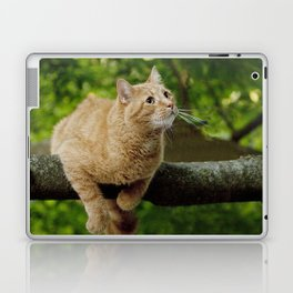 Photograph of a Cat hanging on a Limb Laptop & iPad Skin