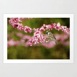 Spring Redbud Art Print