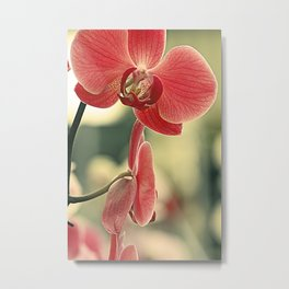 The mystery of orchid (15) Metal Print