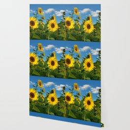 Sunflowers 11 Wallpaper