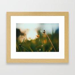 Shine #2 Framed Art Print