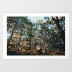 into the woods 10 Art Print