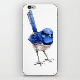 Splendid Fairy Wren, Blue on White iPhone Skin