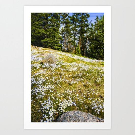 Acadia Spring   (Maine) Art Print