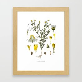 Nature, botanical print, flower poster art of Chamomile Framed Art Print
