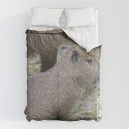 adorable capybara baby Comforters