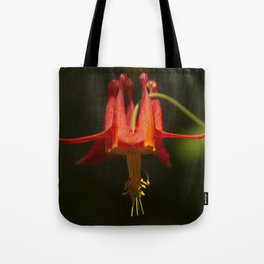 A red Columbine is luminous in the morning sun near Russian Gulch in Mendocino, California Tote Bag