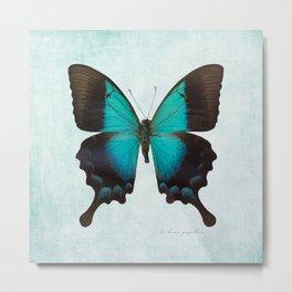 Blue Butterfly Art  - Metal Print