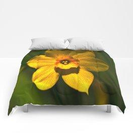 Daff-O-Dil Comforters