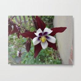 Mountain Flower Metal Print