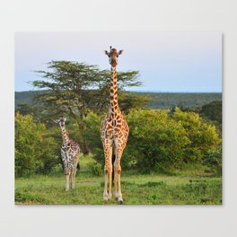 Giraffe Widlife Photography #society6 #home #decor Canvas Print