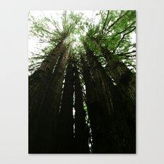 Redwoods #2 Canvas Print