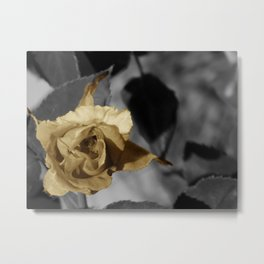 Silver and Gold Metal Print