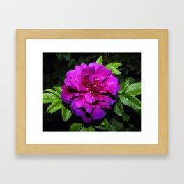 Colour of blooming Framed Art Print