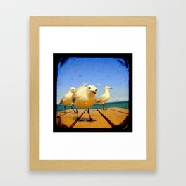 Seagulls - number 4 from set of 4 Framed Art Print