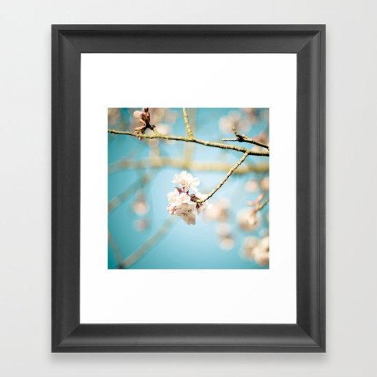 Cherry Blossom, Pink Flowers and Blue Sky. Framed Art Print