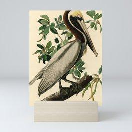 Brown Pelican (Pelecanus occidentalis) Scientific Illustration Mini Art Print