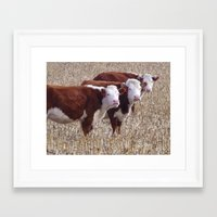 cows Framed Art Prints featuring Cows by DownSpriggLane