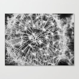 dandelion fireworks Canvas Print