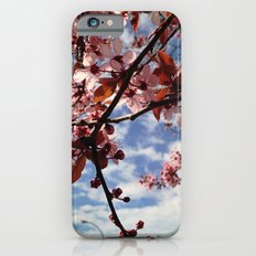 Cherry Blossoms in Spring Slim Case iPhone 6s